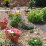 Растения в неприхотливом саду