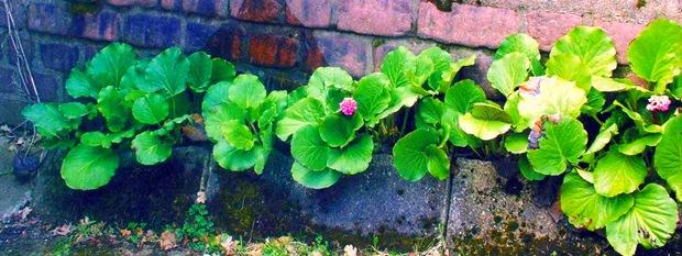 Растения для ниш