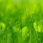 Лужайка – альтернатива традиционному газону