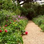 Идеи для создания неприхотливого сада