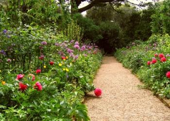 Неприхотливый сад
