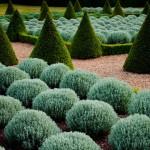Чарующее совершенство регулярного сада