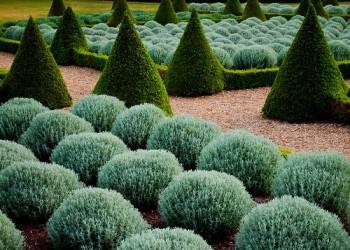Регулярный сад