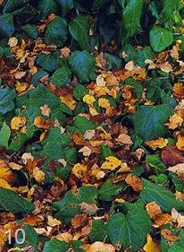 Маскировка опавшей листвы