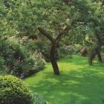Чтобы сад хорошел с годами