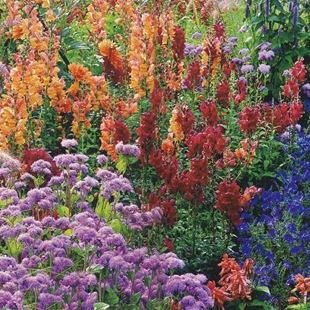 Идея для сада - цветник из однолетников