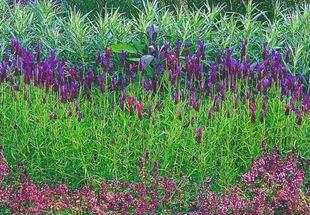 Идея для сада - ароматный цветник