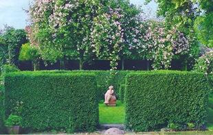 Идея для сада - зеленая комната