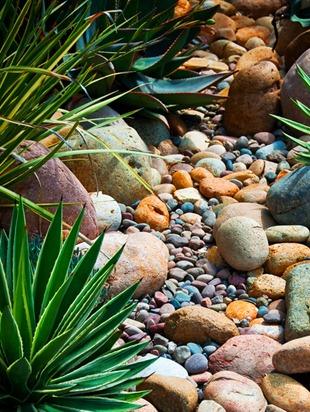 Галька, гравий и суккуленты - каменистый сад